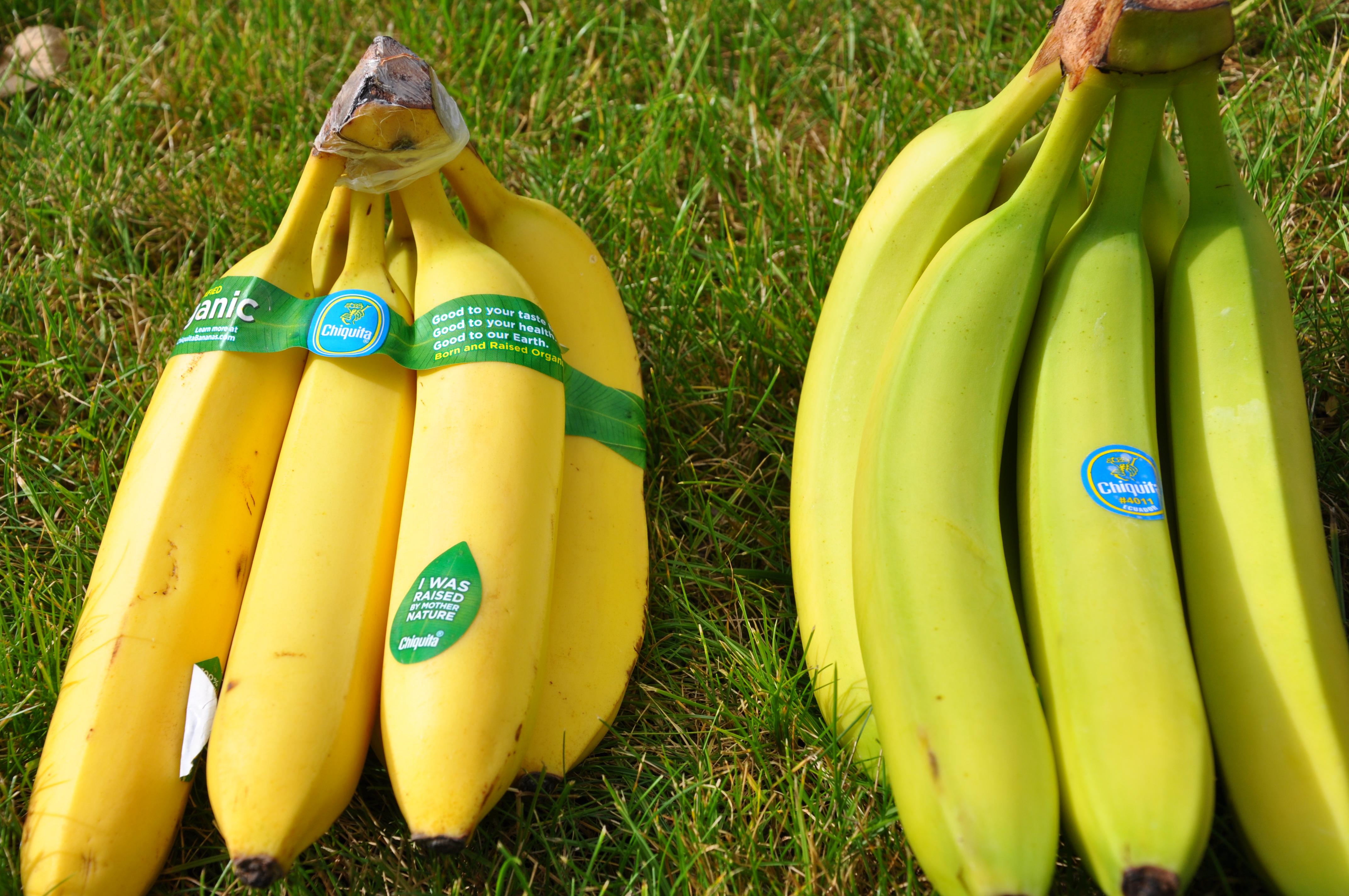 Gmo Banana Vs Organic Banana