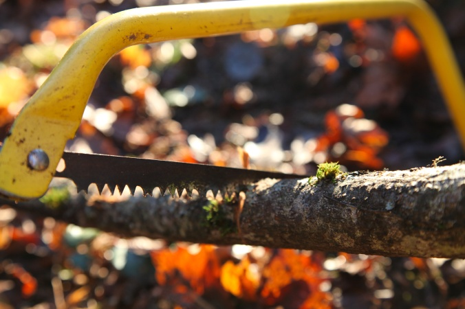 Handsaw for Winter Foraging
