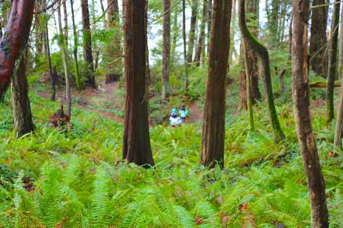 Hiking Through Ferns on the Close Property Trail © Liesl Clark