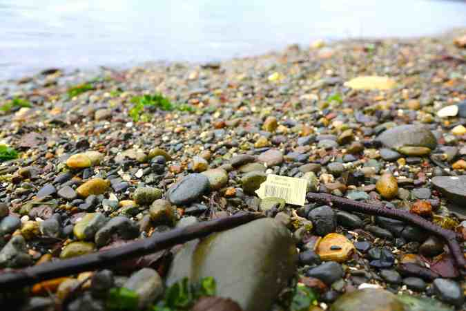 Nursery Plant Tags are a common Beach Plastic © Liesl Clark